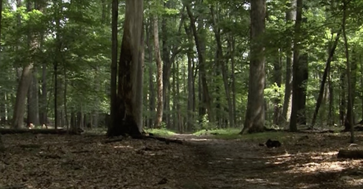 A trail leads into a wooded area in Catoctin Mountain Park, located in Thurmont, Maryland.