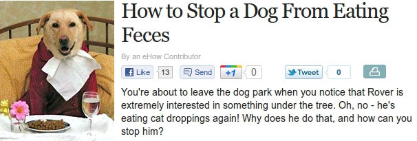 How To Stop A Dog From Eating Feces